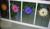 FLower Windows 2